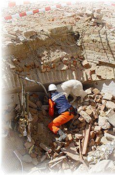Baskim-Vergas bei der Trümmersuche