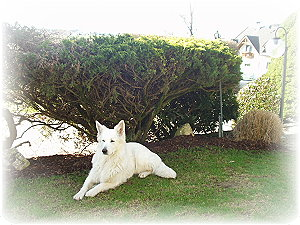 Bionda-May vom Weissen Wächter