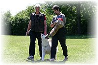 Weisser Schäferhund bei der Schutzausbildung
